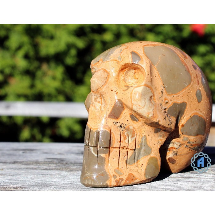 Crâne jaspe léopard
