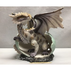 Dragon coquille
